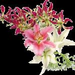 fleurshaut